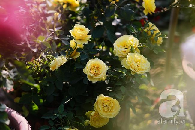 Cô gái khởi nghiệp bằng vườn hoa hồng, doanh thu tiền tỷ: Thế hệ tôi, làm thuê là khái niệm quá cũ! - Ảnh 3.