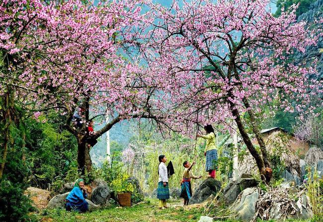 4 điểm đến đẹp như mơ, nhất định nên đến để cảm nhận trọn vẹn cảnh sắc tháng 2 - Ảnh 3.