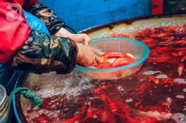 Cận cảnh chợ cá chép phục vụ Tết ông Công, ông Táo lớn nhất tại Hà Nội - Ảnh 8.
