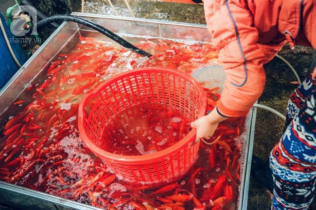 Cận cảnh chợ cá chép phục vụ Tết ông Công, ông Táo lớn nhất tại Hà Nội - Ảnh 9.