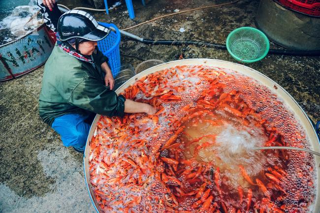 Cận cảnh chợ cá chép phục vụ Tết ông Công, ông Táo lớn nhất tại Hà Nội - Ảnh 10.