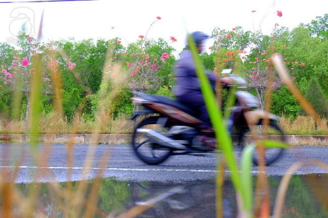 Ven Sài Gòn, có một con đường thơ mộng ngập tràn hoa giấy - Ảnh 5.