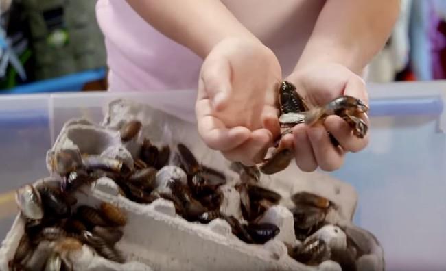 Kinh ngạc bé gái 8 tuổi nuôi hàng nghìn con gián làm thú cưng - Ảnh 5.