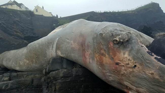 Sinh vật khổng lồ trông như quái vật thời tiền sử dạt vào bờ biển - Ảnh 1.