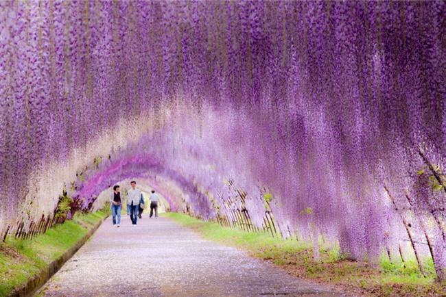 Những con đường hoa đẹp như chốn thần tiên - Ảnh 10.