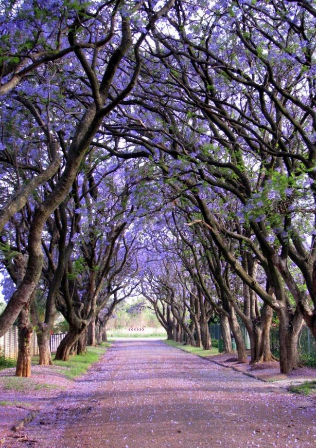 Những con đường hoa đẹp như chốn thần tiên - Ảnh 12.
