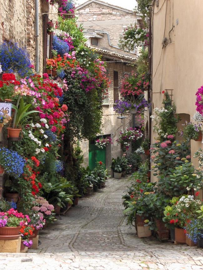 Những con đường hoa đẹp như chốn thần tiên - Ảnh 13.