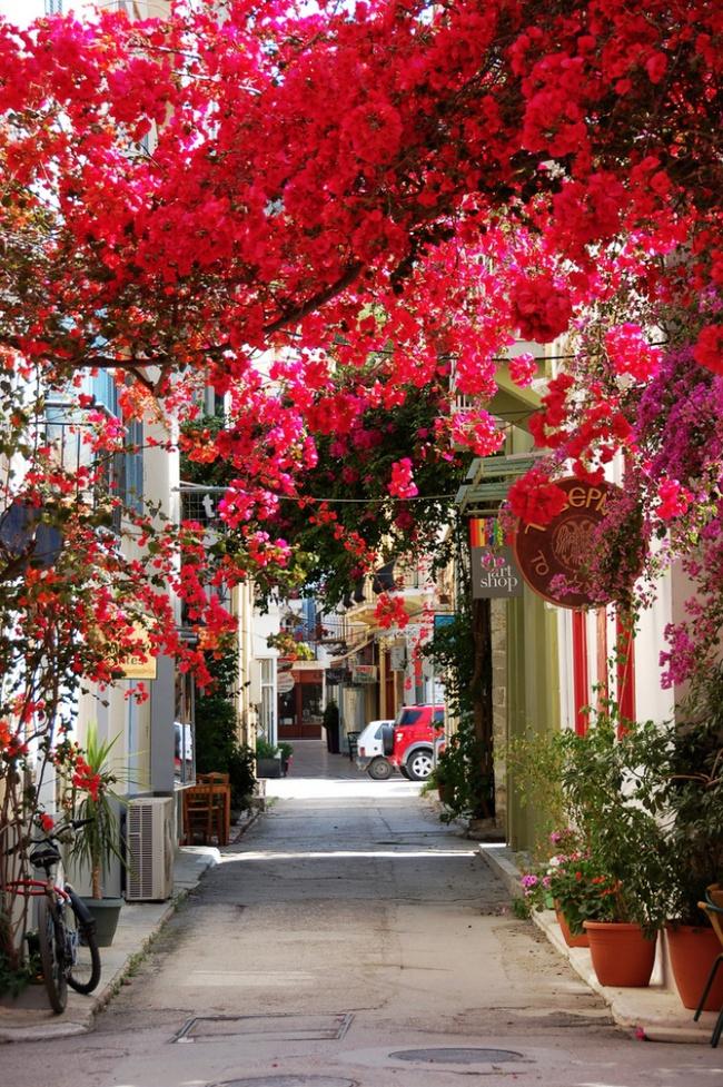 Những con đường hoa đẹp như chốn thần tiên - Ảnh 14.