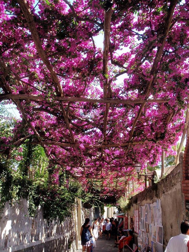 Những con đường hoa đẹp như chốn thần tiên - Ảnh 17.