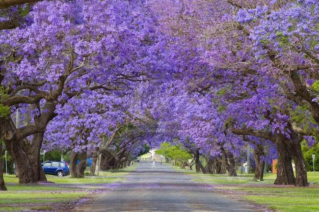 Những con đường hoa đẹp như chốn thần tiên - Ảnh 2.