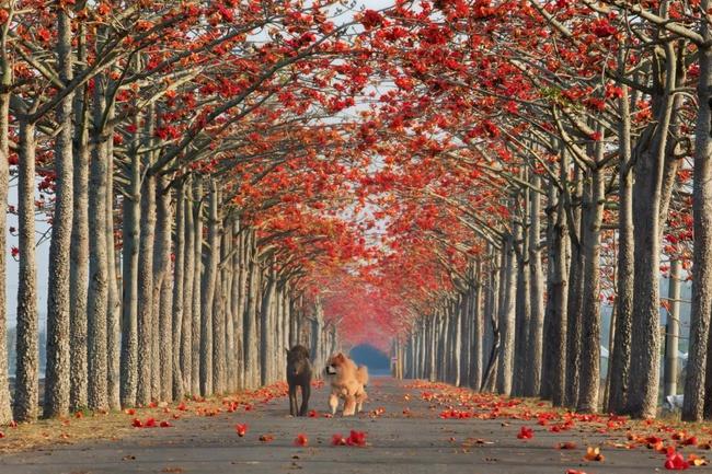 Những con đường hoa đẹp như chốn thần tiên - Ảnh 3.