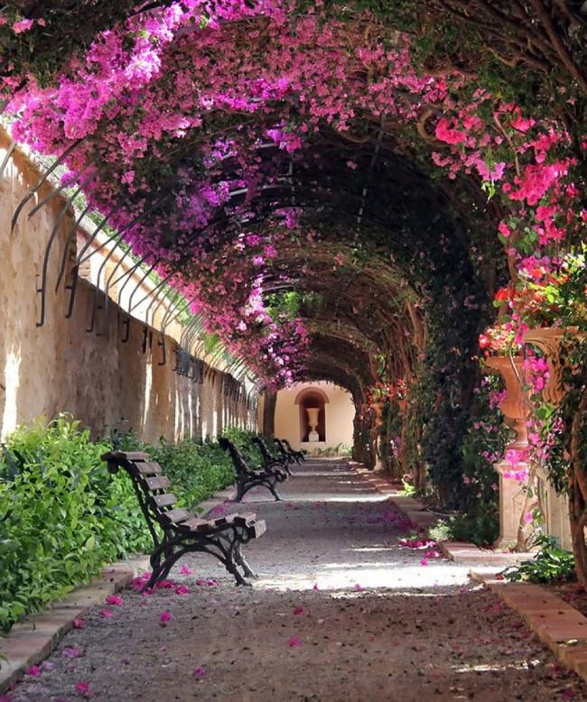 Những con đường hoa đẹp như chốn thần tiên - Ảnh 8.