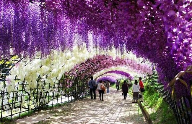 Những con đường hoa đẹp như chốn thần tiên - Ảnh 9.