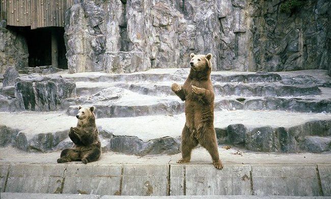 """Bật cười với những """"sự thật"""" mới được tiết lộ về thế giới động vật - Ảnh 14."""