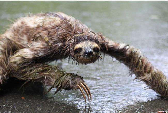 """Bật cười với những """"sự thật"""" mới được tiết lộ về thế giới động vật - Ảnh 5."""
