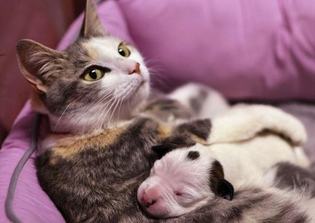 Báo động tình trạng nhiễm ấu trùng giun đũa chó mèo - Ảnh 1.
