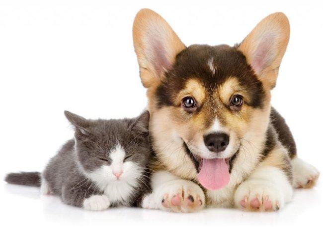 Báo động tình trạng nhiễm ấu trùng giun đũa chó mèo - Ảnh 4.