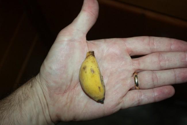 Những giống chuối kỳ lạ nhất thế giới có thể bạn chưa được nhìn thấy - Ảnh 5.