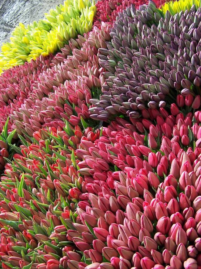 6 khu vườn hoa tulip chỉ nhìn thôi cũng khiến người ta ngất ngây bởi quá đẹp, quá rực rỡ - Ảnh 16.