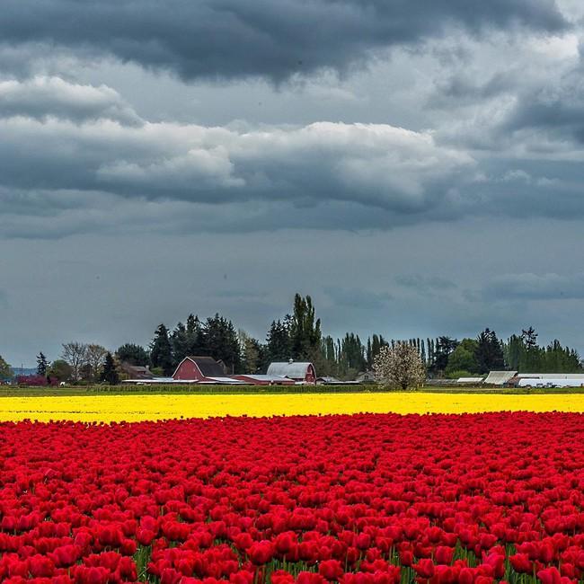 6 khu vườn hoa tulip chỉ nhìn thôi cũng khiến người ta ngất ngây bởi quá đẹp, quá rực rỡ - Ảnh 21.