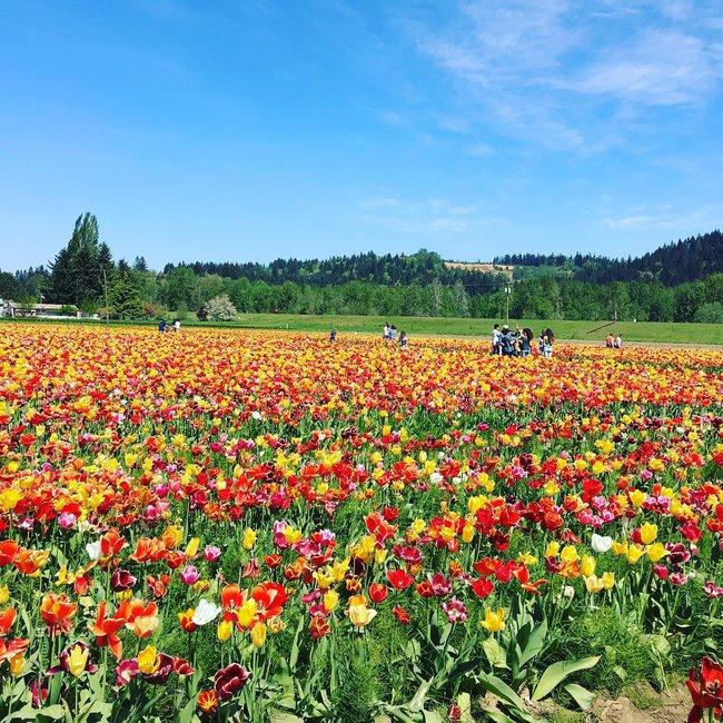 6 khu vườn hoa tulip chỉ nhìn thôi cũng khiến người ta ngất ngây bởi quá đẹp, quá rực rỡ - Ảnh 23.