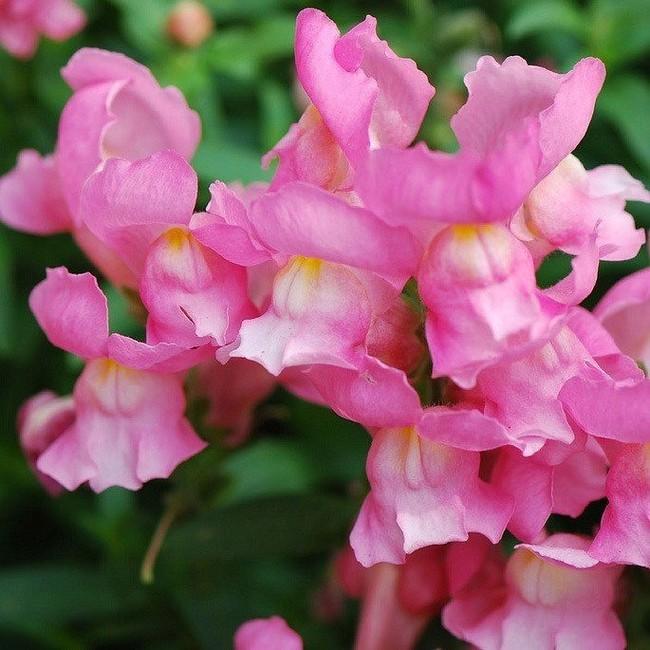 Loài hoa kì lạ tuyệt đẹp mang nhiều giai thoại huyền bí - Ảnh 1