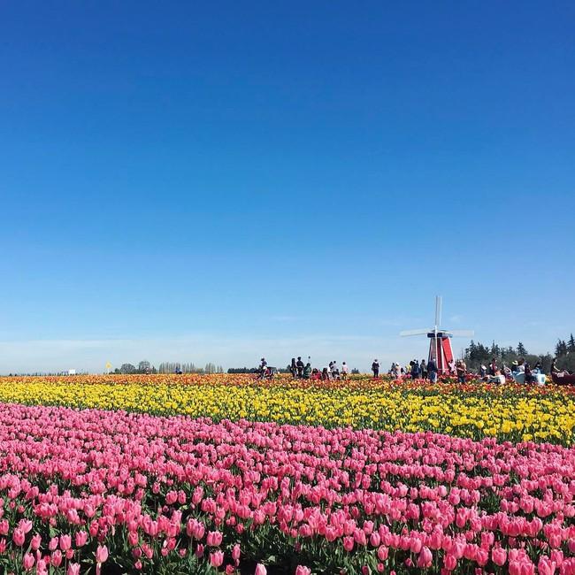 6 khu vườn hoa tulip chỉ nhìn thôi cũng khiến người ta ngất ngây bởi quá đẹp, quá rực rỡ - Ảnh 5.
