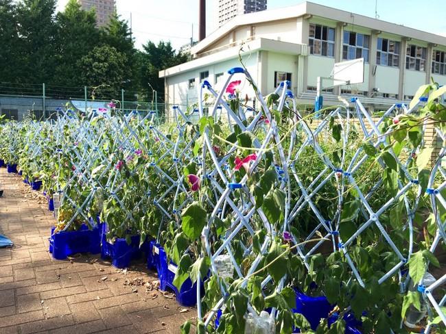 Khám phá kì nghỉ hè đầy ắp hoạt động của học sinh Nhật Bản - Ảnh 2.