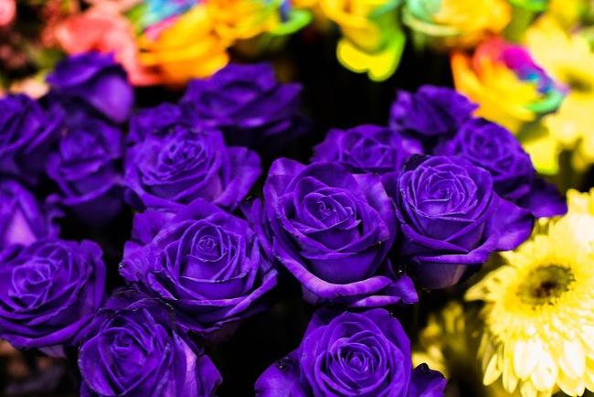 Ngắm loạt hoa nhập khẩu độc, đẹp khiến quý ông không tiếc tiền chi hẳn trăm triệu tặng vợ dịp 8/3 - Ảnh 20.