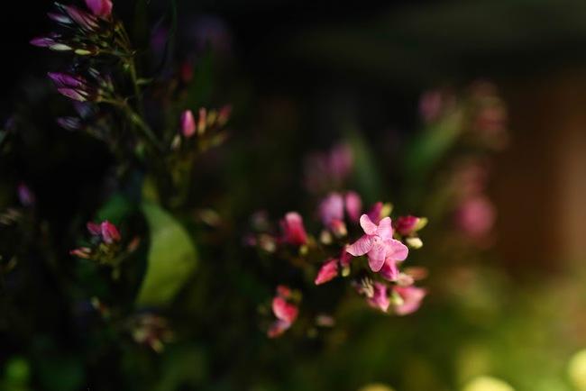 Ngắm loạt hoa nhập khẩu độc, đẹp khiến quý ông không tiếc tiền chi hẳn trăm triệu tặng vợ dịp 8/3 - Ảnh 17.