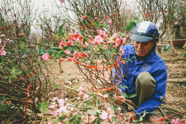 Rằm tháng Chạp, đã thấy nôn nao vị Tết khi hoa đào về trên phố xuân - Ảnh 13.