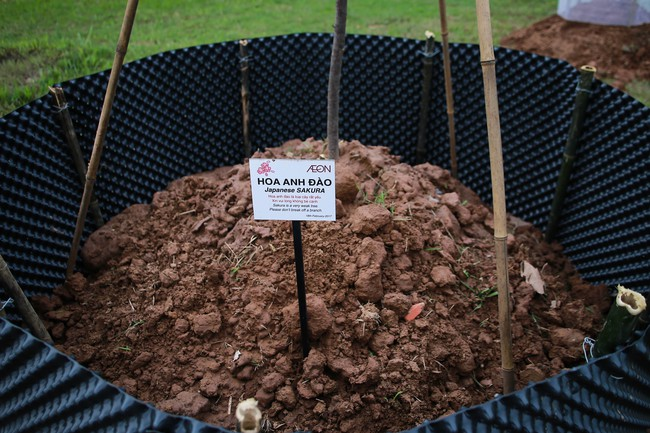 Cận cảnh 130 cây anh đào Nhật Bản vừa được trồng tại Công viên Hòa Bình - Ảnh 4.
