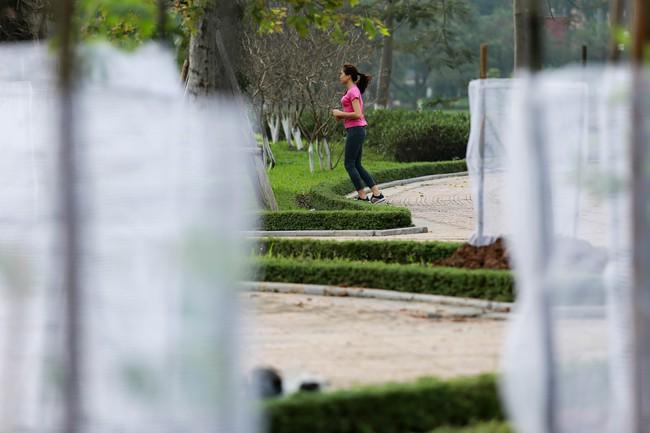 Cận cảnh 130 cây anh đào Nhật Bản vừa được trồng tại Công viên Hòa Bình - Ảnh 6.