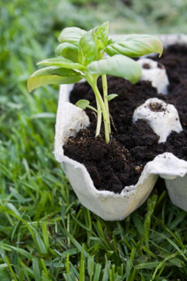 10 ý tưởng tái chế những món đồ cũ phổ biến trong nhà thành chậu gieo hạt lý tưởng - Ảnh 4.