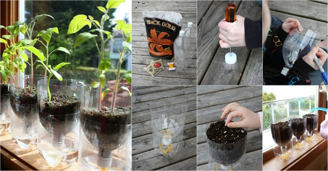 10 ý tưởng tái chế những món đồ cũ phổ biến trong nhà thành chậu gieo hạt lý tưởng - Ảnh 7.