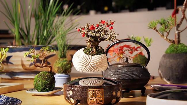 Bonsai treo lơ lửng - thú chơi Tết tao nhã của người dân Hà Thành - Ảnh 5.