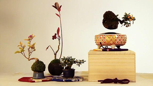 Bonsai treo lơ lửng - thú chơi Tết tao nhã của người dân Hà Thành - Ảnh 8.