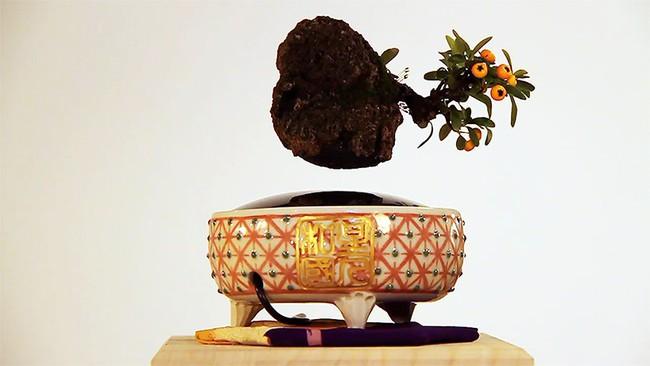 Bonsai treo lơ lửng - thú chơi Tết tao nhã của người dân Hà Thành - Ảnh 9.