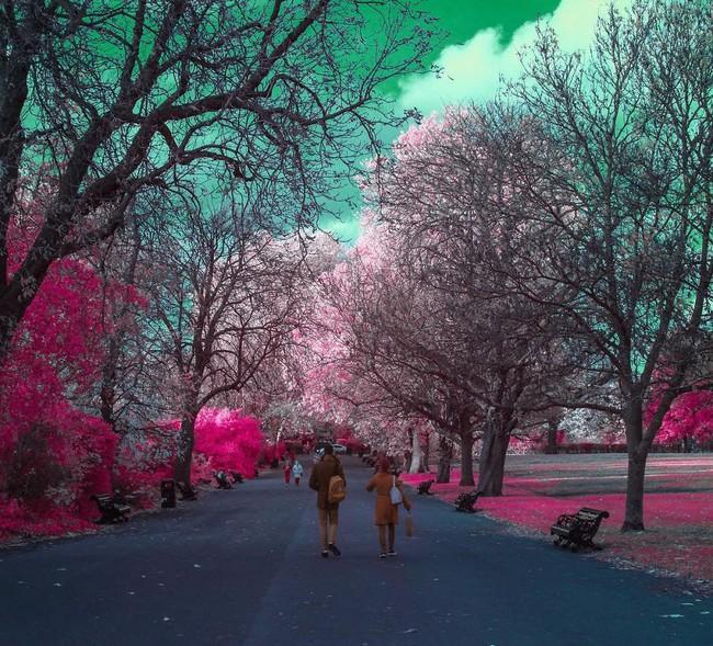 Nếu thế giới chỉ có 2 màu thì cảnh vật vẫn đẹp lung linh khiến bạn ngẩn ngơ - Ảnh 2.