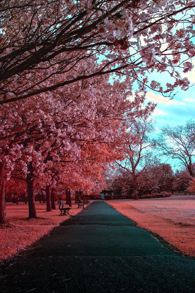 Nếu thế giới chỉ có 2 màu thì cảnh vật vẫn đẹp lung linh khiến bạn ngẩn ngơ - Ảnh 4.