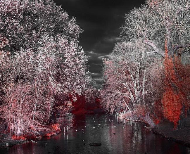 Nếu thế giới chỉ có 2 màu thì cảnh vật vẫn đẹp lung linh khiến bạn ngẩn ngơ - Ảnh 11.