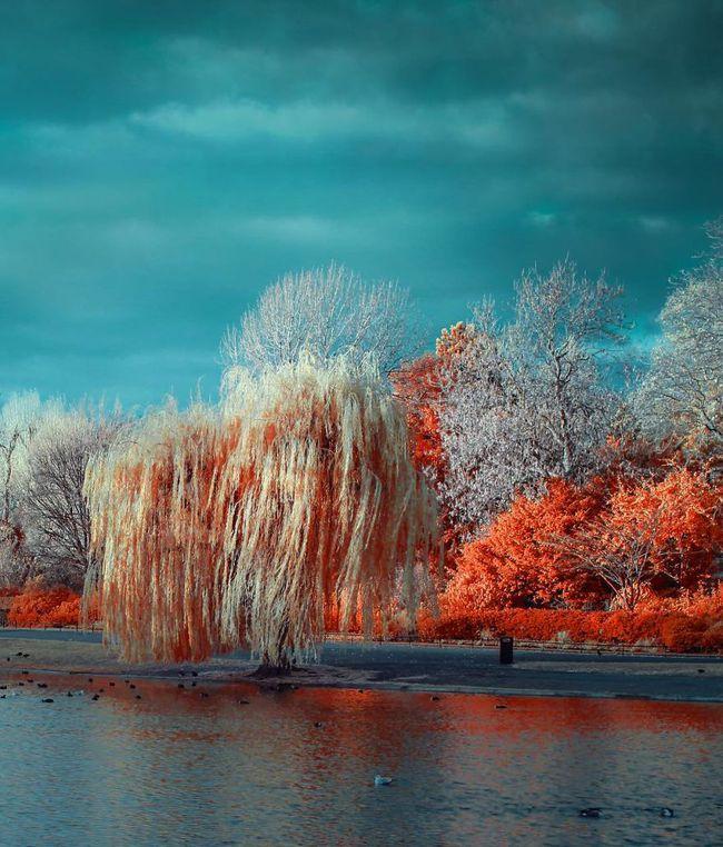 Nếu thế giới chỉ có 2 màu thì cảnh vật vẫn đẹp lung linh khiến bạn ngẩn ngơ - Ảnh 13.