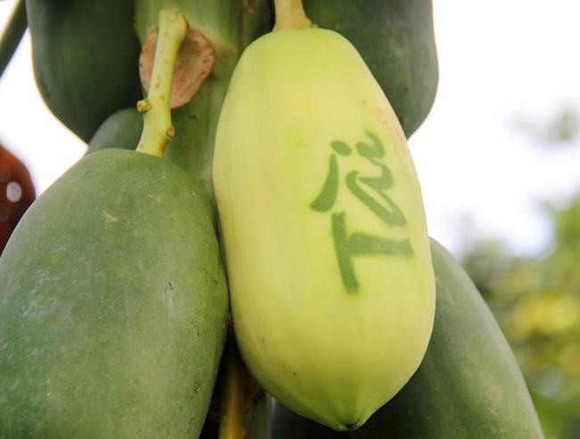 5 loại trái cây khắc chữ giá tiền triệu vẫn nhiều người tìm mua dịp Tết - Ảnh 3.
