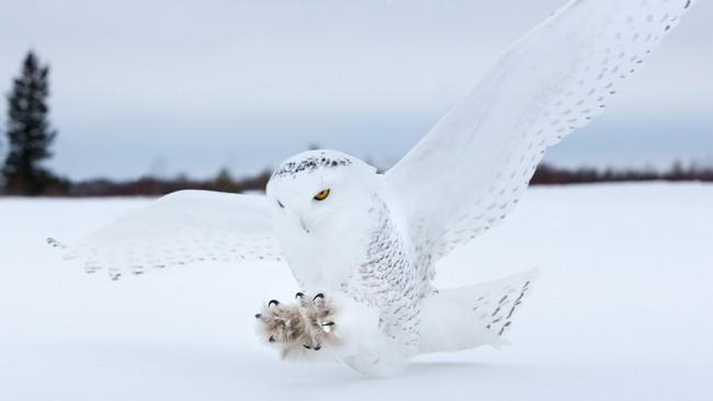 Những khung cảnh đẹp như cổ tích khi tuyết trắng bao phủ trên thế giới - ảnh 8