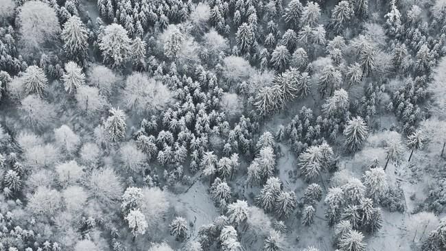Những khung cảnh đẹp như cổ tích khi tuyết trắng bao phủ trên thế giới - ảnh 9