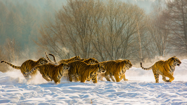 Những khung cảnh đẹp như cổ tích khi tuyết trắng bao phủ trên thế giới - ảnh 16
