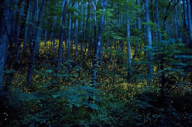 Những vùng đất hoá thế giới cổ tích khi màn đêm buông xuống - Ảnh 7.