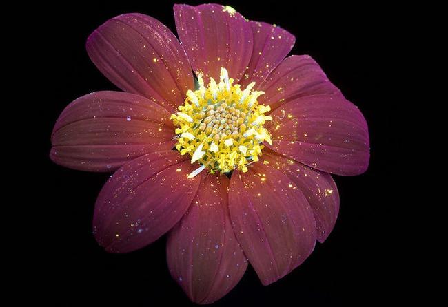 Khi những bông hoa phát sáng đẹp đến ngỡ ngàng - Ảnh 2.