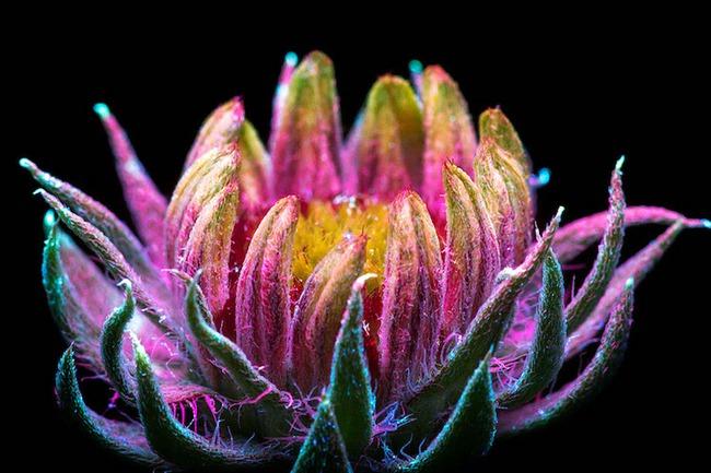 Khi những bông hoa phát sáng đẹp đến ngỡ ngàng - Ảnh 6.