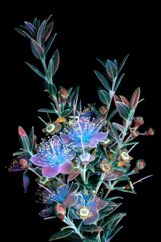 Khi những bông hoa phát sáng đẹp đến ngỡ ngàng - Ảnh 8.